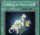 Flowers of Nepenthe