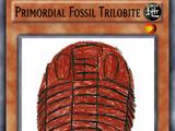 Primordial Fossil Trilobite