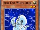 Blue-Eyes White Chick