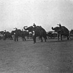 Elephants in use by Indian cavalry.