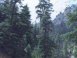 Dikenli Oluk Ormanları