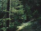 Bolyaran Ormanları