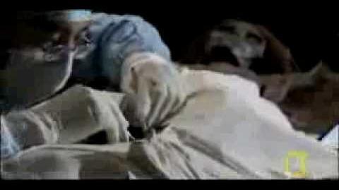 White Mummies in China (National Geographic)
