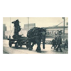 During World War I, elephants pulled heavy equipment. This one worked in a munitions yard in Sheffield.