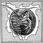 Roachball