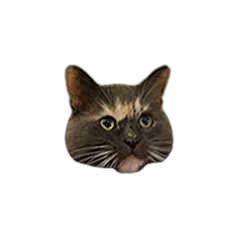 zoeyCat