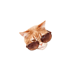 nilesyCoolcat
