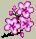 Trinket-Cherry blossom