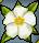 Trinket-Plumeria blossom