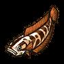 Schlangenkopffisch