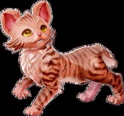 Carrier Cat