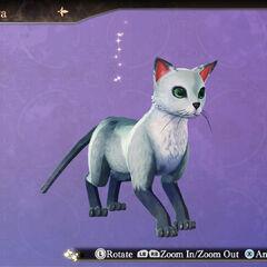 Picker Cat