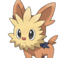 Lillie's Lillipup
