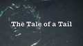 The Tale of a Tail Small