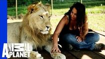 Lions Treat Woman Like the Leader of Their Pride