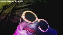 Shark Puppet dances!