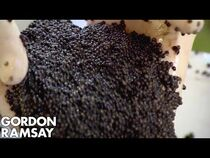 Gordon Ramsay Is Stunned by Farmed Caviar; Makes Lobster & Caviar Salad