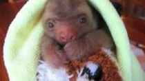 Believe (Cher) -- Adam Ragusea (w baby sloths)