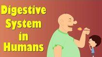 Digestive System of Human Body aumsum
