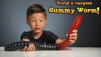 WORLD'S LARGEST GUMMY WORM vs