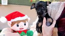 Giving Rescue Dogs Christmas Presents!