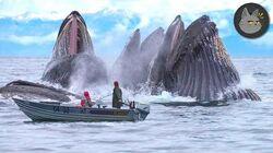 10 Animales Gigantescos Que Viven En Las Profundidades