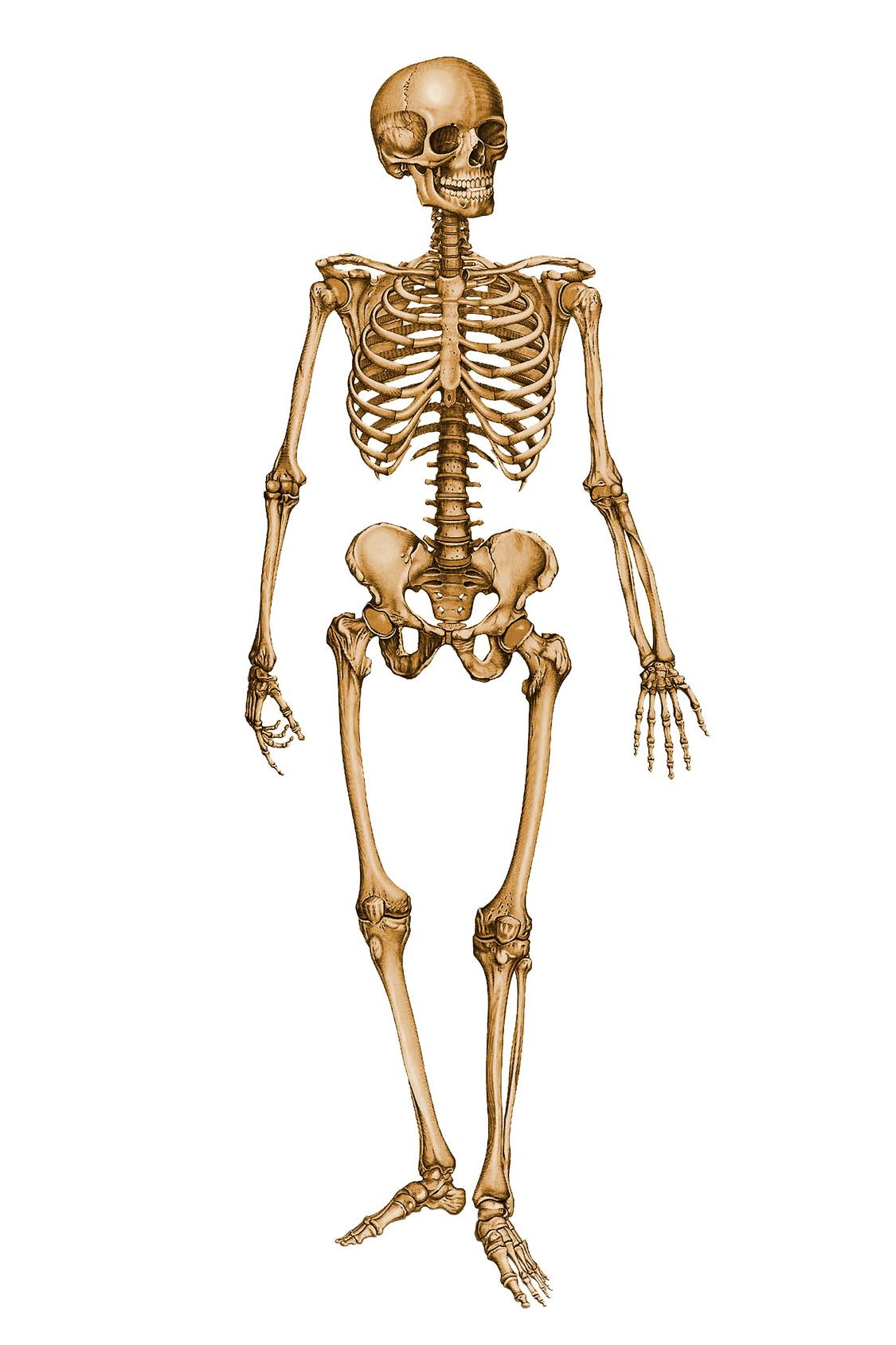Skeletons Youtube Poop Wiki Fandom Powered By Wikia