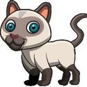 Pet (6)