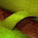 Cocoa Creek