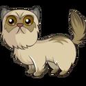 Pet (9)
