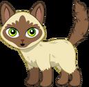 Pet (18)