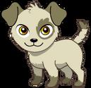 Pet (19)