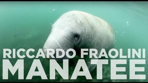 Riccardo Fraolini - The Manatee - CLYW