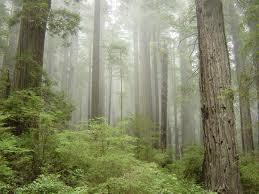 File:Redwoods.jpg
