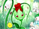 Épinette la Rose Naturia