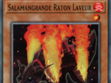 Salamangrande Raton Laveur