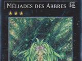 Méliades des Arbres