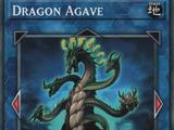 Dragon Agave