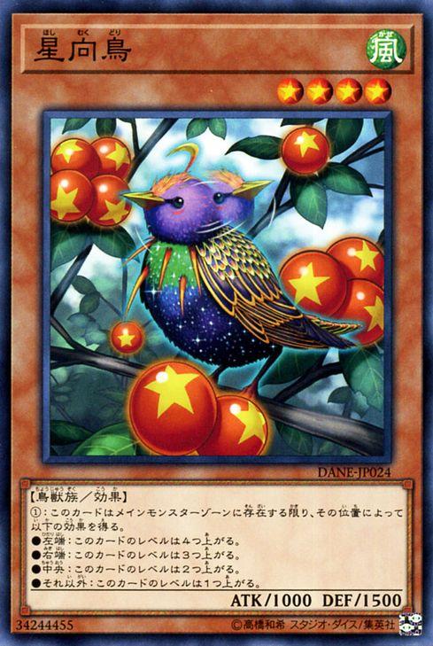 Hoshimukutori-DANE-JP-C