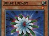 Bulbe Luisant