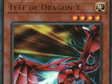 Tête de Dragon Y