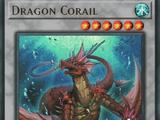 Dragon Corail