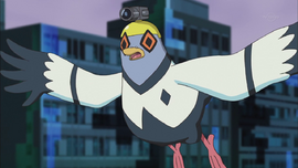 Ep 003 Pigeon