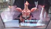 PhoenixBeastGairuda-DT-JP-VG-NC