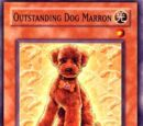 Outstanding Dog Marron