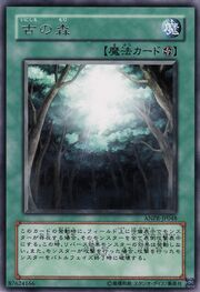 AncientForest-ANPR-JP-R