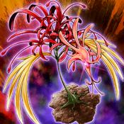 PhoenixianClusterAmaryllis-TF04-JP-VG