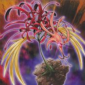 PhoenixianClusterAmaryllis-OW