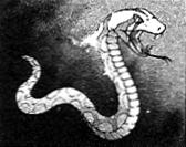 Lightserpent-EN-Manga-ZX-CA