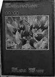 Number61Volcasaurus-JP-Manga-ZX